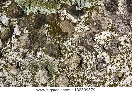 Closeup Texture Of Lichen And Moss Covered Surface