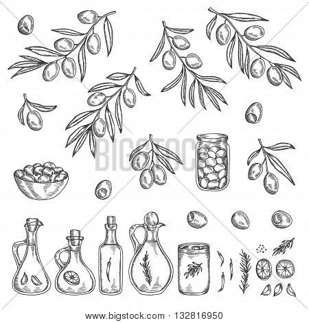 Hand drawn olive graphic set. Collection of olive branches, oil bottles, jars and other design elements. Vector ink drawn illustration.