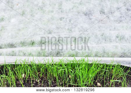 New Lawn With Green Grass Under Nonwoven Fabric
