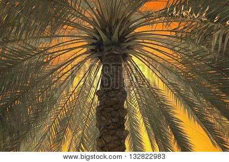 Digital painting of a date palm against an orange sky