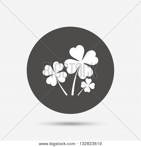 Clovers with four leaves sign icon. Saint Patrick symbol. Gray circle button with icon. Vector