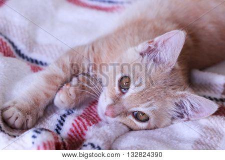 Orange furry kitten laying on soft blanket