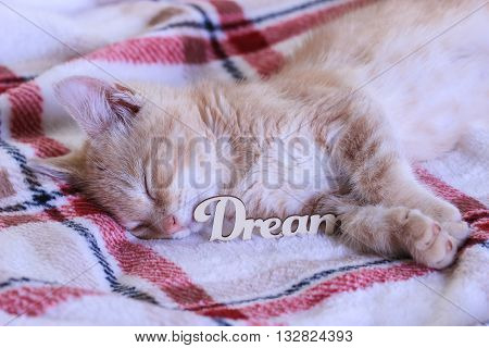Orange furry kitten dreaming by red checkered heart; Valentine's Day and love concept