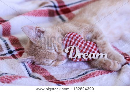 Orange furry kitten sleeping by red checkered heart and the word Dream; Valentine's Day and love concept