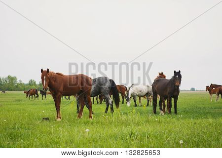 a herd of horses grazing in a meadow on a summer day