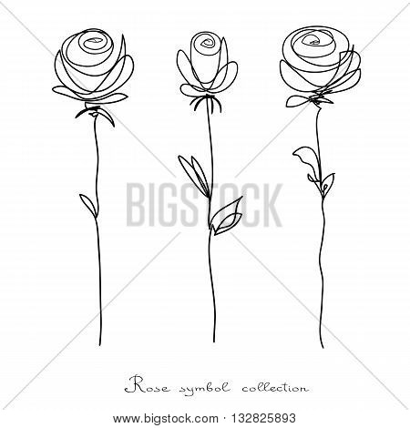 Roses. Collection of isolated flower sketch on white background. The continuous line doodled design.