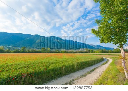 Dirt Road Trough Italian Countryside