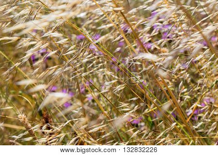 a wildflowers and spikelets motion on wind