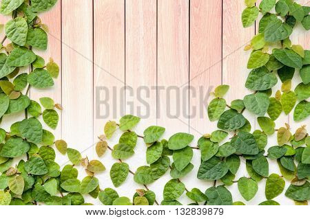 green creeper plant on grunge wood plank