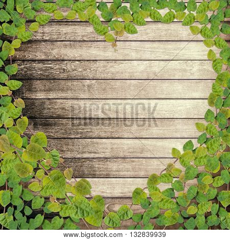 green creeper plant shaped as heart on wood plank