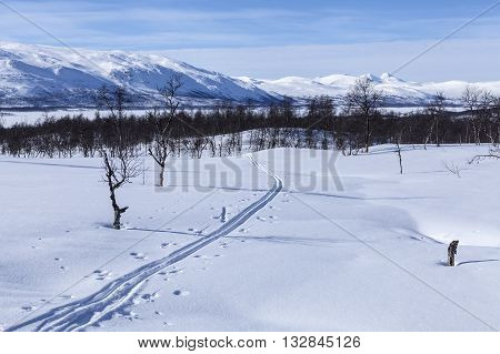 Cross country tracks on a mountainside. Newly fallen snow and sunshine. Mountains in the background.