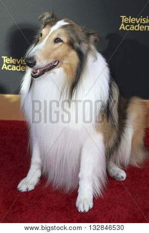 LOS ANGELES - JUN 2:  Lassie at the Television Academy 70th Anniversary Gala at the Saban Theater on June 2, 2016 in North Hollywood, CA