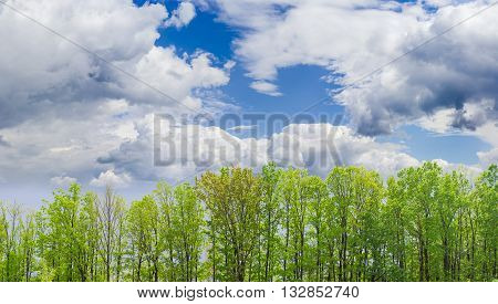 Planting deciduous trees in the park with fresh spring leaves against the sky with cumulus and storm clouds