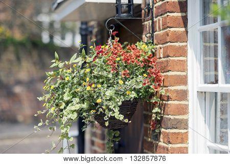 Spring flowers in a Hanging basket in Farnham, Surrey.