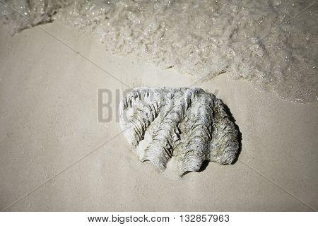 Раковина лежащая на береге, The shell lying on the beach