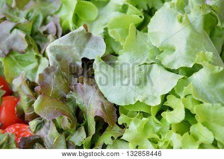 green oak vegetable salad on plastic tray