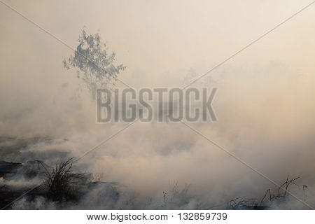 Smoke field after wildfire background and wallpaper