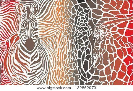 vector illustration background of zebra and giraffe