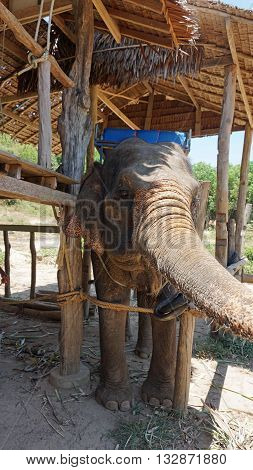elephant park on ko lanta island in thailand