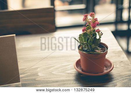 little pink flower in a flowerpot (vintage effect)