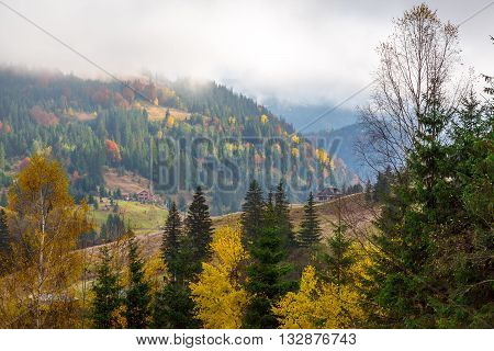 Seasonal Landscape of Autumnal Mixed Forest with Yellow Leaves of Birches Maple and Aspen and Green Pines with Fog Coming Down to Valley