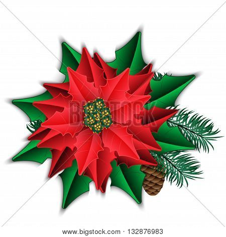 Poinsettia and fir branch with cone isolated on white. Vector illustration.