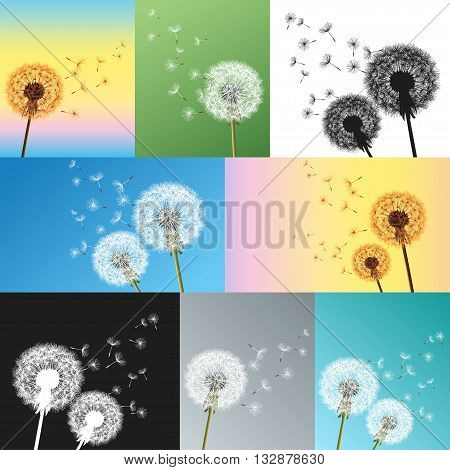 Set of dandelion blowing seeds isolated. Beautiful stylish nature background with flowers dandelions and flying fluff. Trendy floral summer or spring wallpaper. Vector illustration