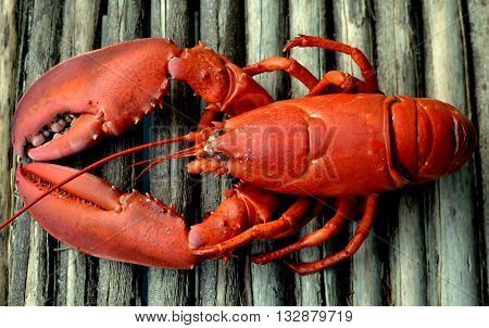 Whole Cooked Red Lobster: Close-up of a cooked red lobster on a rustic wooden table top.