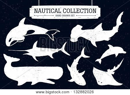 Hand drawn nautical collection of fish and sea inhabitants on black background. Dolphin white shark killer whale cachalot hammer-head swordfish and ramp.