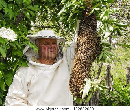 Bee keeper with a swarm of honeybees