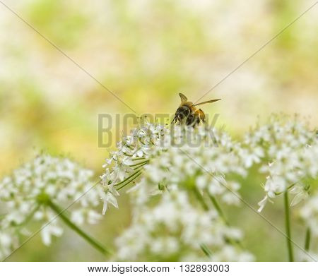pastel colored scenery showing a bee on white flower