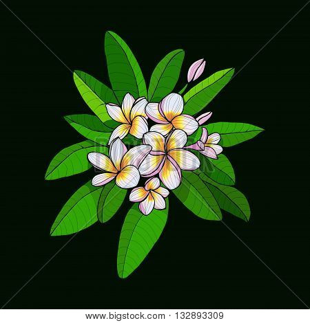 Beautiful Bouquet with Hawaii flower Frangipani and leaves white Plumeria on dark green background. Vector floral elements in contour style for print or summer design.