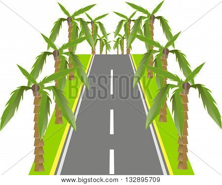 Grey road with green palms on the roadside, vector illustration
