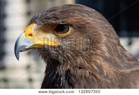 A close up image of a bird of prey