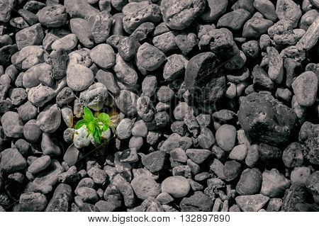 Small tree sprouting out of the ground stones niche. Environment concept