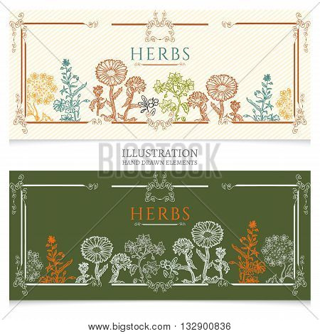 Medical herbs banners natural cosmetics on plants