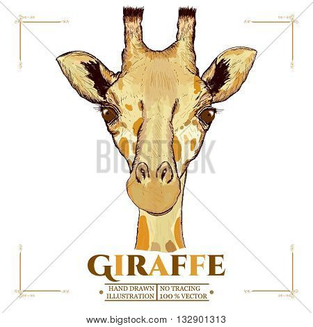 Giraffe realistic portrait hand drawn animals vector