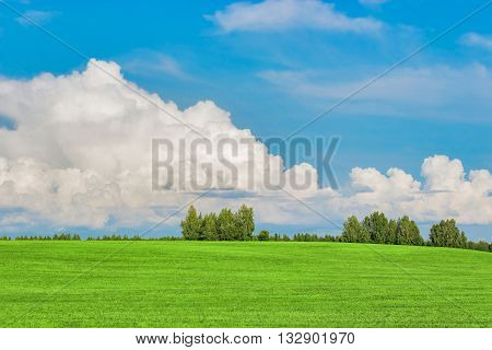 panoramic view of green field, forest and sky