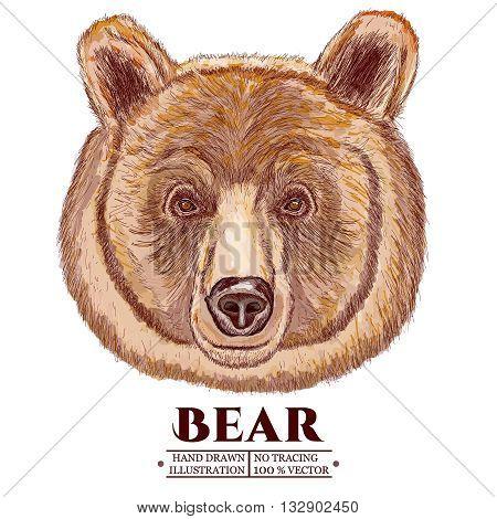 Portrait of a bear head of a brown bear vector illustration