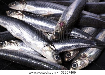 fresh anchovies for preparing and cooking a recipe