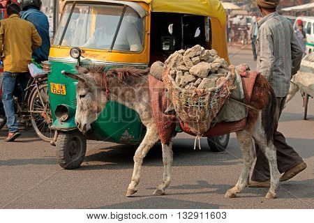 DELHI, INDIA - NOVEMBER 20, 2015: Indian man and his donkey transporting building rubble in the crowded street of Deli