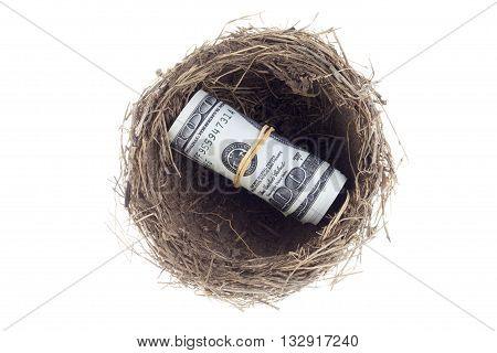 dollars with bird nest on white background