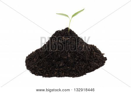 young plant in soil isolated on white background