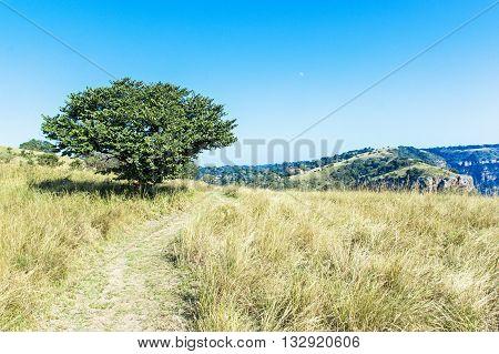 Trail  Leading Through Winter Grassland Next To Single Tree