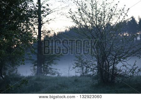 Dewy meadow in front of a forest in the early hazy spring morning