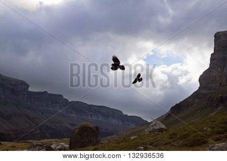 two vultures flying in the mountains in autumn