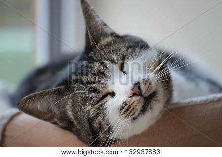 A cat sleeps with a smile-like expression