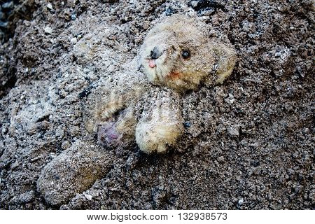 Lacerated and abandoned teddy bear in a pile of ashes