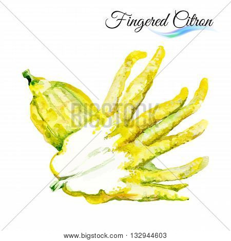 Watercolor fingered citron isolated on white background
