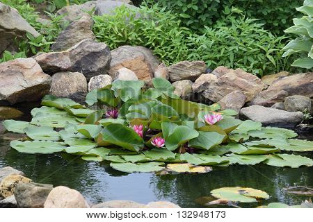 a rock lined pond with blooming lily pads.